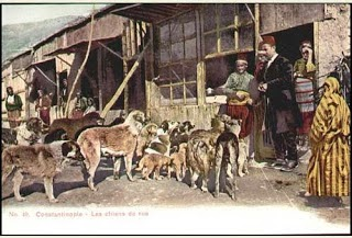 """Résultat de recherche d'images pour """"les chiens d'istanbul de catherine pinguet"""""""